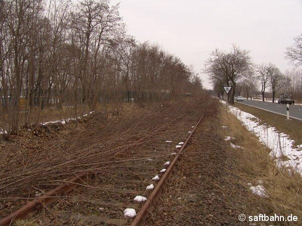 Durch die lange Betriebsruhe hat sich die Vegetation entlang der Strecke breit gemacht. Am 19.03.2005 startete der Vegetationsrückschnitt, hier zwischen Sandersdorf und Heideloh.