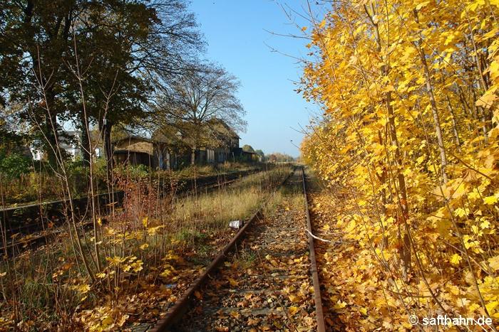 Herbstliches Stillleben im Zörbiger Bahnhof. Die Vegetation nahm sich am 01.11.2011 eine Auszeit und bereitete sich auf die Winterjahreszeit vor.